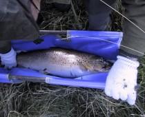 2001elfiskeri3