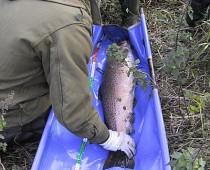 2001elfiskeri4