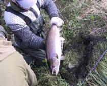 2001elfiskeri5