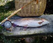 Årets fiskebillede 2010